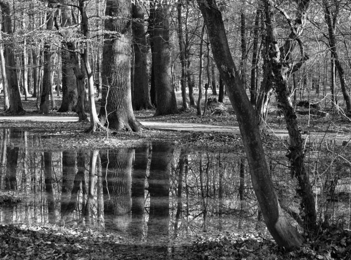 """Photography titled """"Maksimir forest"""" by Mirsad Mehulic, Original Art,"""
