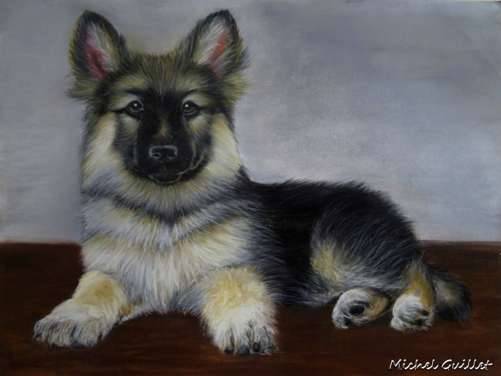 Sultan - Drawing ©2016 by Michel Guillet -                                                            Realism, Paper, Animals, Chien, Berger allemand, portrait animalier, animaux pastels secs, Pastellistes de France, Talents aujourd'hui et demain, pastelliste animalier