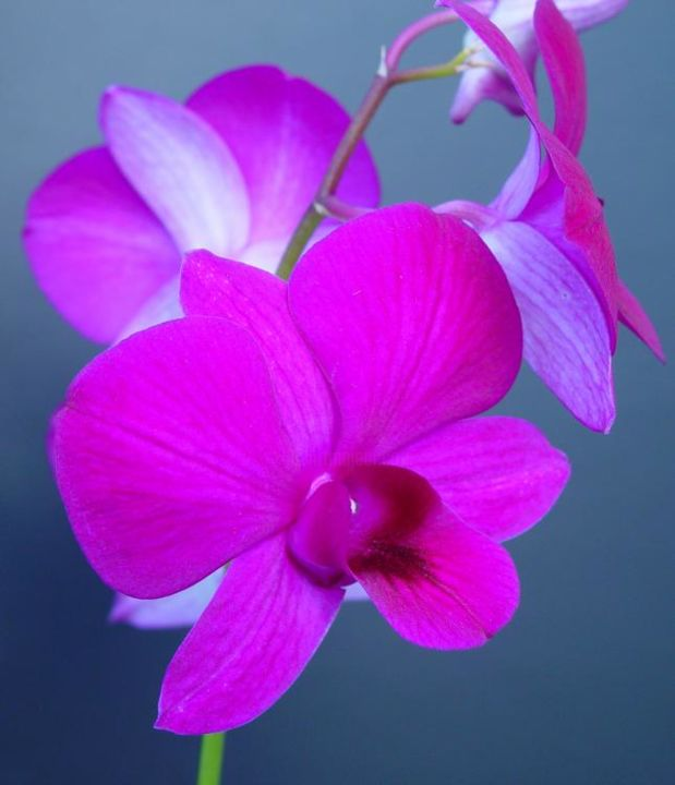 """Photography titled """"Lavender orchid see…"""" by Miguel, Original Art,"""