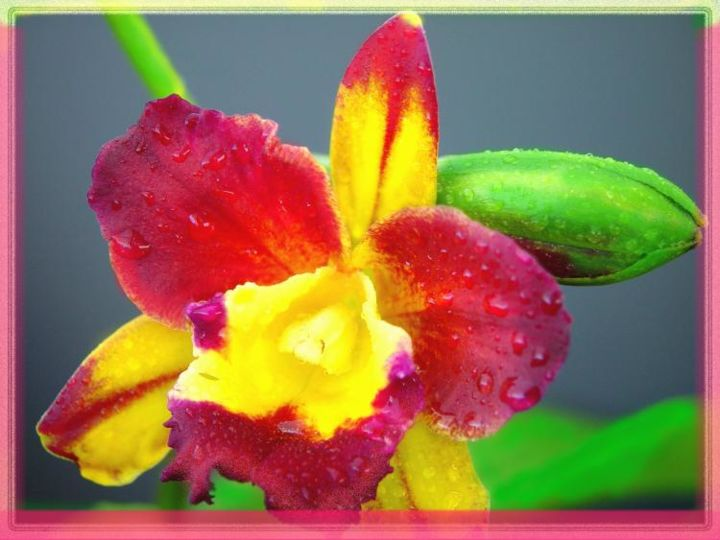 """Photography titled """"Magenta and yellow…"""" by Miguel, Original Art,"""