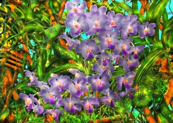 """Photography titled """"light lavender spra…"""" by Miguel, Original Art,"""