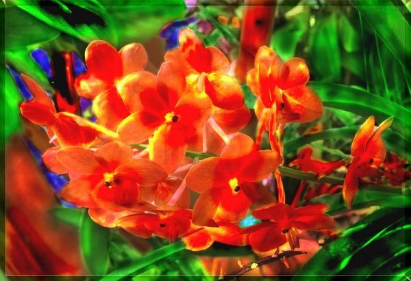 A cluster of red orchids in the rainforest - Photography,  13x19 in ©2005 by miguel -