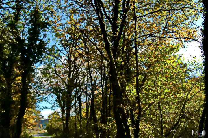 Sous bois - Photography, ©2009 by Miodrag Aubertin -                                                                                                                                                                                                      Seasons, Sous bois, Doubs, Miodrag Aubertin