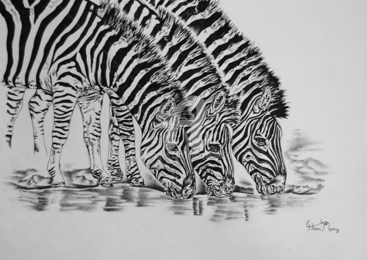 water hole - Drawing,  29.7x42x0.2 cm ©2014 by Mistry Visuals -                                                            Photorealism, Paper, Animals, art, fine liner, graphite, wildlife, zebras, stripes, drawing