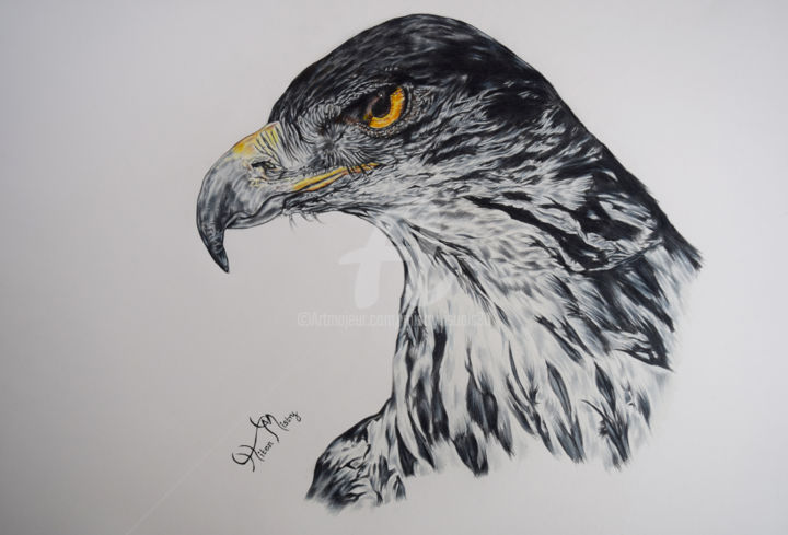 Hawk eagle drawing by mistry visuals artmajeur