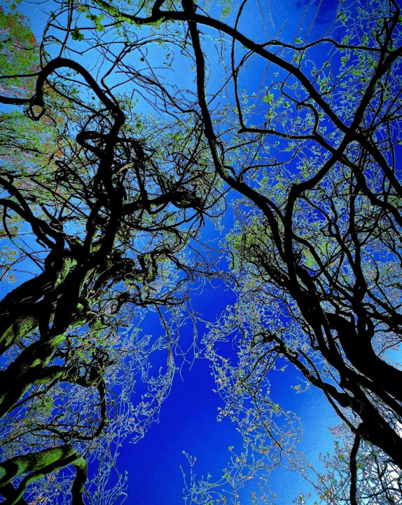 """Photography titled """"blue sky and  trees"""" by mistychna, Original Art,"""
