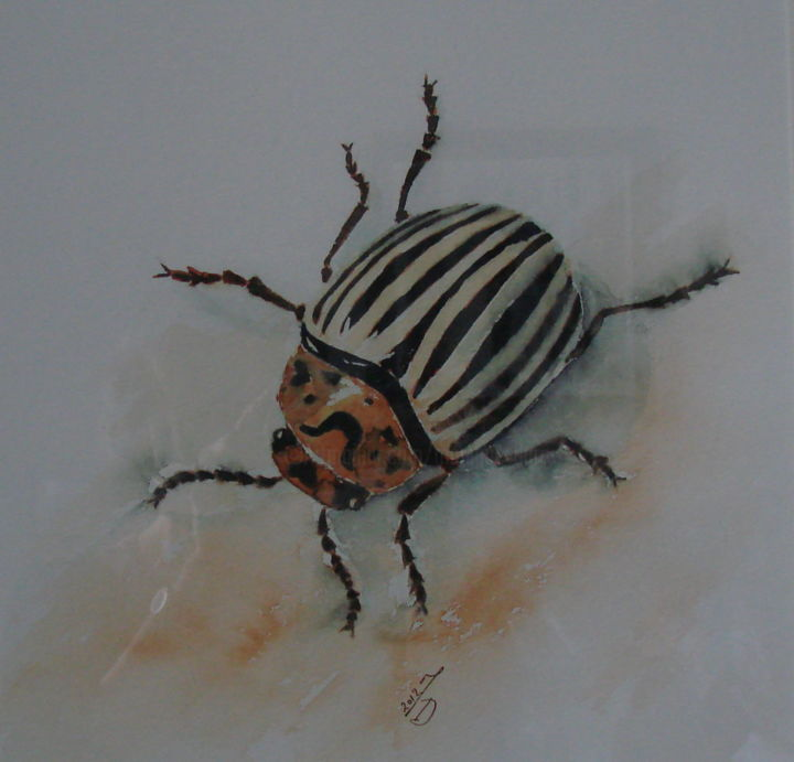 INSECTE 2 - Painting,  11.8x11.8 in, ©2015 by Monique Darry -                                                                                                                                                                                                      Nature, Monique Darry, aquarelle, insecte