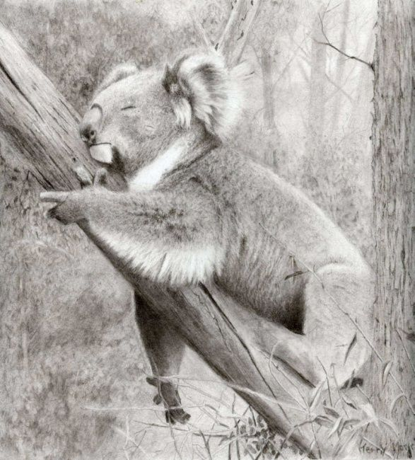 """Drawing titled """"Afternoon Nap"""" by Branbuds, Original Art, Other"""
