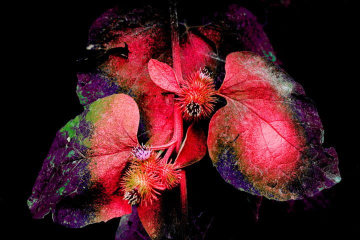 Dream n. 5 (limited edition 10) - Photography,  23.6x35.4x0.8 in, ©2009 by Cristina Gualmini -                                                                                                                                                                                                                                                                                                                                                                                                                                                                                                                                              Figurative, figurative-594, Nature, plant, flora, nature, still life, photography, dream, cristinagualminiphotography, fuchsia