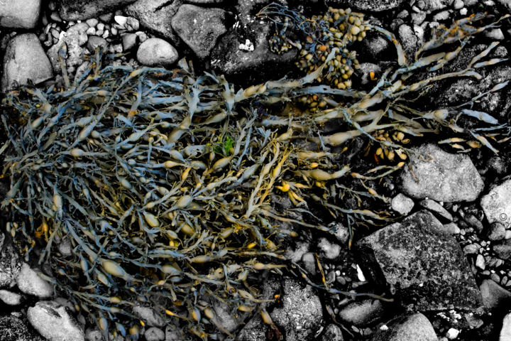 Memory n. 2 (limited edition 10) - Photography,  23.6x35.4x0.8 in, ©2008 by Cristina Gualmini -                                                                                                                                                                                                                                                                                                                                                                                                                                                                                                                                              Figurative, figurative-594, Nature, nature, flora, stones, plant, earth, still life, memory, cristinagualminiphotography