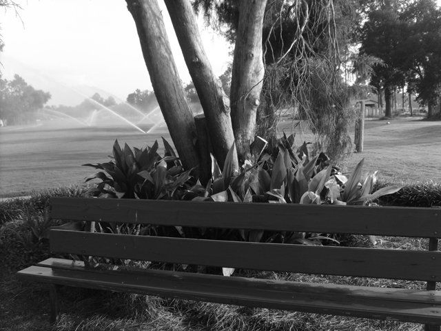 """Photography titled """"In memory Gray Scale"""" by Nicole Tidmore, Original Art,"""