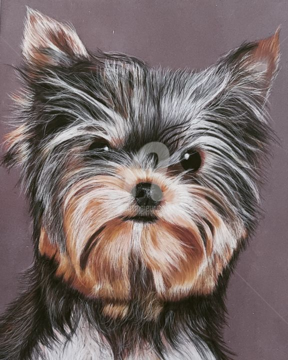 """Drawing titled """"Yorshire Terrier"""" by Ninon Cobergh, Original Art, Other"""