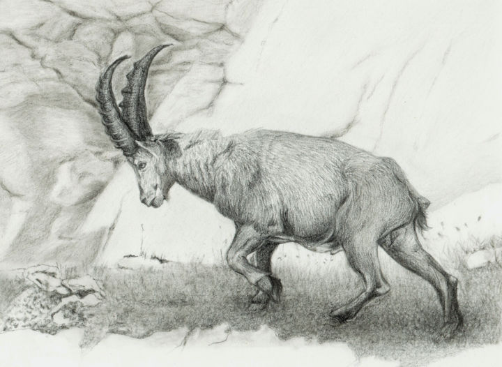 ALPINE IBEX Based On The Photo By Matej Vrani