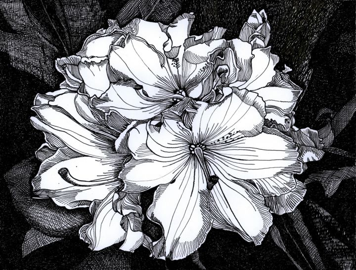 Melrose Flash Rhododendron - Drawing,  15.1x24.8 cm ©2016 by Nives Palmić -                                                                                                                                Classicism, Conceptual Art, Contemporary painting, Illustration, Black and White, Botanic, Flower, Nature, Seasons, rhododendron flowers, nature rhythms, beauty of line, shades of grey, beautiful details, glamurous flowers