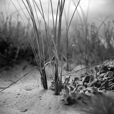 Dune d'argent 03 - Photography, ©2006 by Oeildepierre -                                                                                                          plage  mer  ocean  dune   plante  marine  sable   nuage  sea   plant  sand  lumiere  light, Black and White