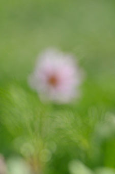 cosmos - Photography,  36x24 cm ©2009 by oeildepierre -