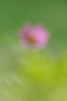 cosmos 2 - Photography,  36x24 cm ©2009 by oeildepierre -