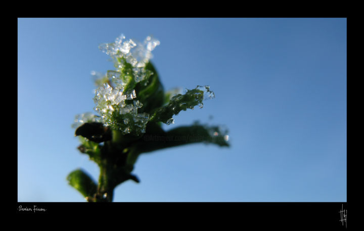 """""""Série Premiers Frissons"""" - Photography, ©2012 by Olivier GROLLEAU -                                                                                                          photographie nature ice, Limited Edition"""