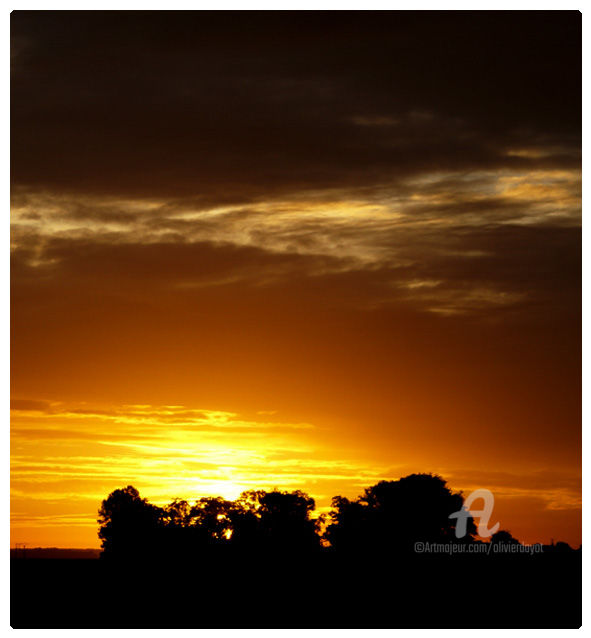 """Bébé Nature s'endort"" - Photography, ©2005 by Olivier Dayot -                                                                                                                                                          Tree, coucher de soleil, arbre"