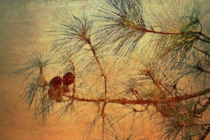 """Photography titled """"art in nature - abs…"""" by Padmanabha Joshi, Original Art, Manipulated Photography"""