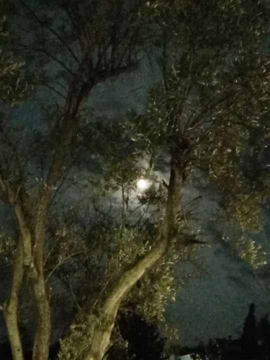 Our olive tree at night - Photography, ©2019 by PakoKante -                                                                                                                                                                          Illustration, illustration-600, Tree