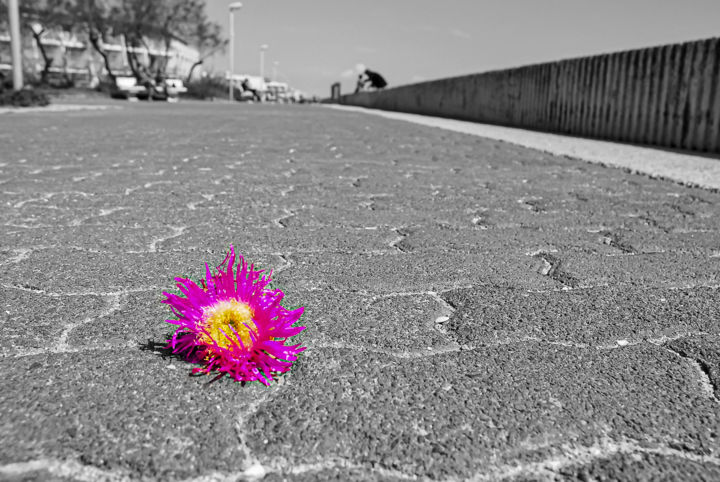 Perdue... - Photography, ©2009 by Patrice CORBIN -                                                                                                                                                                                                                                                                                                                                                                                                                                  Colors, Flower, Still life, Black and White, Cityscape, abandon, perte, pavé, passant