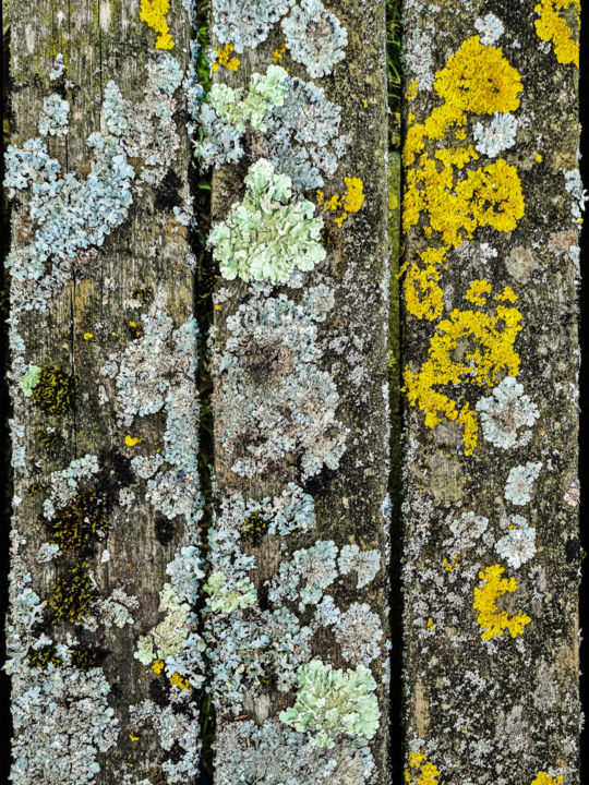 Les planches aux lichens - Photography, ©2019 by Patrice CORBIN -                                                                                                                                                                                                                                                                                                                                                                                                                                  Botanic, Colors, Geometric, Nature, Still life, planche, table, bois, lichen