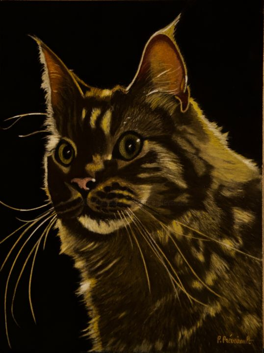 Newton (maine coon) - Drawing,  15.8x11.8 in, ©2019 by Patrice PREVEIRAULT -                                                                                                                                                                                                                                                                                                                                                                                                                                                                                                  Figurative, figurative-594, Animals, Cats, Light, Portraits, Maine Coon, Patrice Préveirault, Clair obscur, Newton