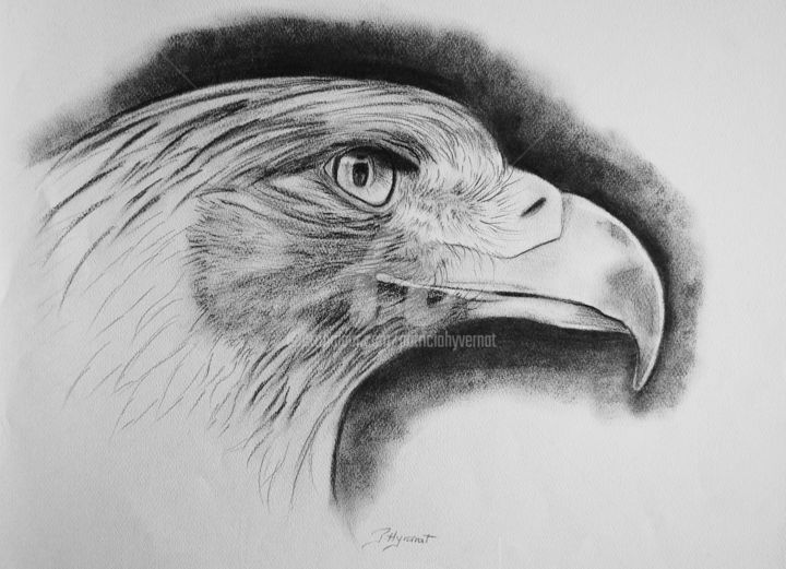 Dessin falco aigle royal dessins - Dessin d aigle royal ...