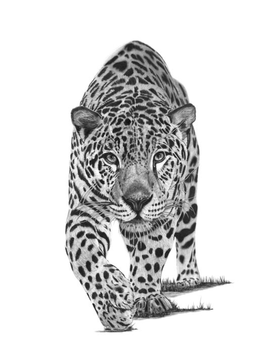 Leopard - Drawing,  21.7x15.8 in, ©2019 by Paul Stowe -                                                                                                                                                                                                                                                                                                                                                                                                                                                                                                                                              Figurative, figurative-594, Animals, Black and White, Cats, Nature, big cats, africa, african, wild, wildlife