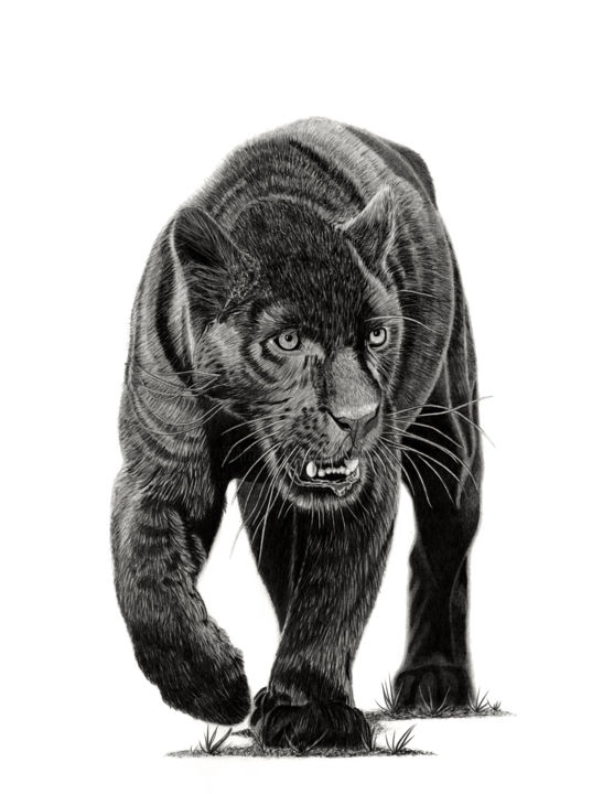 Black Panther - Drawing,  23.6x15.8 in, ©2019 by Paul Stowe -                                                                                                                                                                                                                                                                                                                                                                                                                                                                                                  Figurative, figurative-594, Animals, Asia, Black and White, Cats, big cat, wildlife, jaguar, panther
