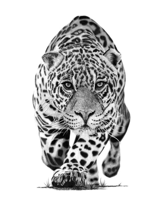 Jaguar - Drawing,  19.7x15.8 in, ©2019 by Paul Stowe -                                                                                                                                                                                                                                                                                                                                                                                                                                                                                                  Figurative, figurative-594, Animals, Black and White, Cats, Nature, jaguar, big cats, wildlife, africa