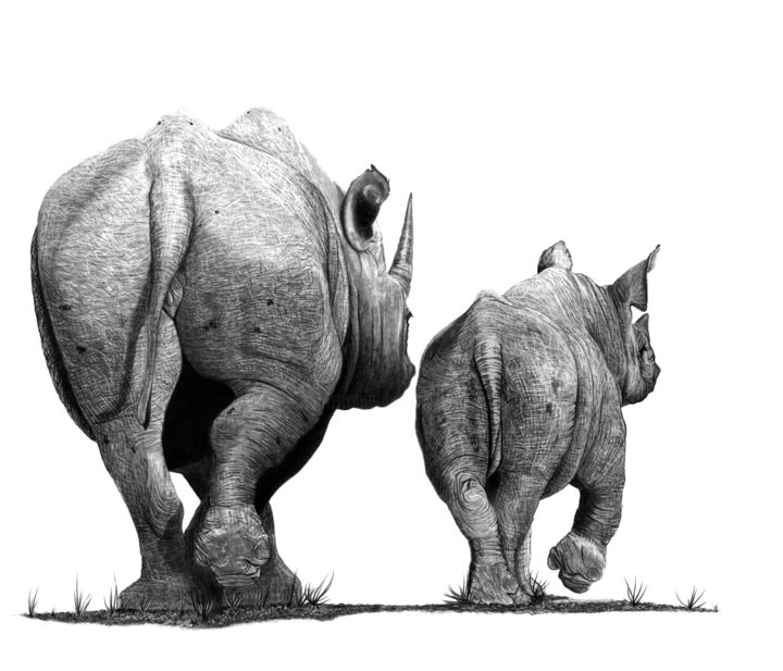 Last Stand - Drawing,  18.5x21.7 in, ©2019 by Paul Stowe -                                                                                                                                                                                                                                                                                                                                                                                                          Figurative, figurative-594, Animals, Black and White, wildlife, rhino, rhinoceros, africa