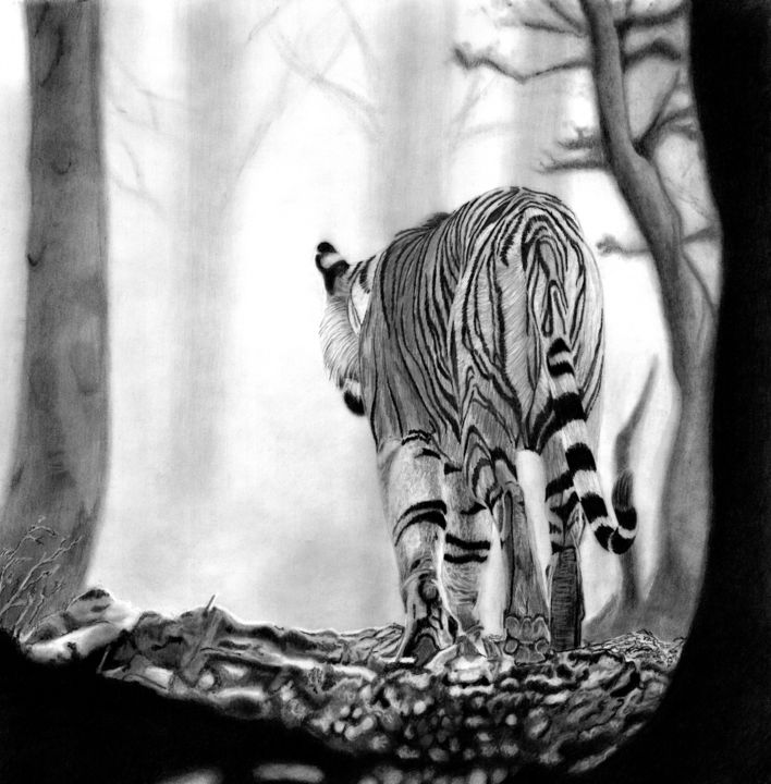 Into the Mist - Drawing,  13.8x13.8 in, ©2019 by Paul Stowe -                                                                                                                                                                                                                                                                                                                                                                                                          Hyperrealism, hyperrealism-612, Animals, Big Cat, Tiger, Wildlife, animal, indian