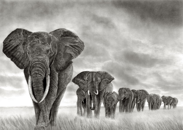 The Journey Home - Drawing,  23.6x33.5 in, ©2019 by Paul Stowe -                                                                                                                                                                                                                                                                                                                                                                                                                                                      Figurative, figurative-594, Animals, Black and White, elephant, african, wildlife, train, herd