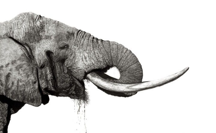 Majestic - Drawing,  21.7x31.5 in, ©2020 by Paul Stowe -                                                                                                                                                                                                                                                                                                                                                                                                                                                      Hyperrealism, hyperrealism-612, Animals, Black and White, Elephant, africa, african, wildlife, photorealism