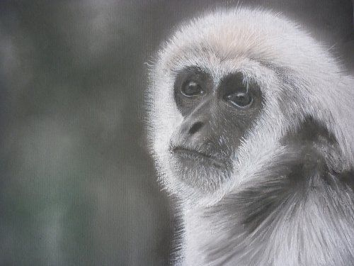It Wasn't Me! - Drawing,  40x30 cm ©2010 by Paul Horton -            Monkey Primate Portrait