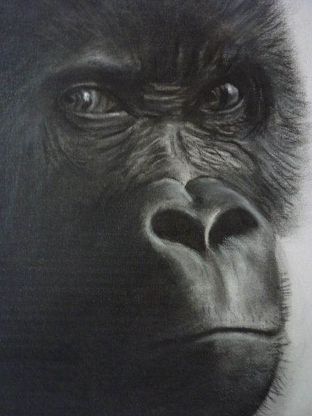 The Stare - Drawing,  60x50 cm ©2010 by Paul Horton -            Gorilla Stare