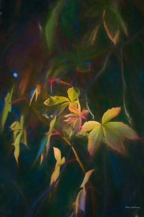 Vine.jpg - Photography,  29.5x19.7x0.8 in, ©2017 by Petra Urbanovic -                                                                                                                                                                                                                                                                                                                                                                                                                                                                                                                              Canvas, Paper, Garden, Nature, autumn, bright, colorful, grape-vine, nature, painterly, photo painting