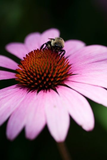 """Photography titled """"The bees know"""" by Petrovision, Original Art,"""