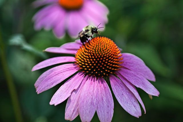 """Photography titled """"Let it bee"""" by Petrovision, Original Art,"""