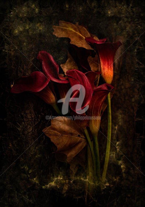 fleur - Photography,  23.6x16.5 in, ©2014 by Philippe Bousseau -                                                                                                                                                                                                                                                                                                                                                                                                                                                                                                                                                                                                                                                                                                                                                                                                                                                                                                                                                          Conceptual Art, conceptual-art-579, Flower, Art graphique, photographie, photo, vente photo, nu, nue, numérique, photo art photography, femme, modèle, graphisme, philippe bousseau, paysage, nature, insolite, noir et blanc, couleur