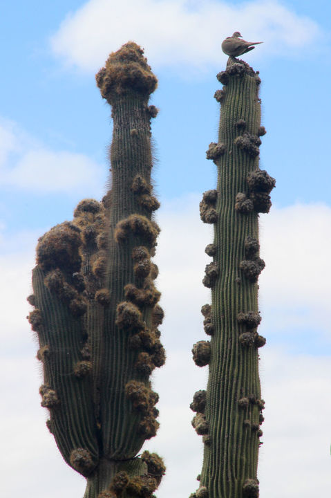 13-Cactus - Photography,  45x30 cm ©2019 by Michel Hervo -