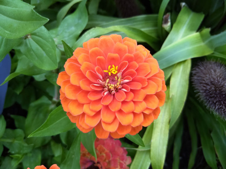 Orange Flower - Photography ©2018 by Photoshopflair -                                                                Botanic, Garden, Nature, Flower, Photography_2018-2, Pic, Picture, Image, Beautiful, Pretty, Vibrant, Plant, Plant Life, Plants, Leaves, Nature, Botanic, Garden