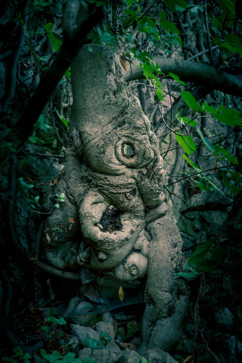 Elephant - Photography,  29.5x19.7 in, ©2020 by Pierre Duquoc -                                                                                                                                                                                                                                                                                                                                                                                                                                                      Hyperrealism, hyperrealism-612, Tree, Botanic, Nature, éléphant, figuier, racines, nature