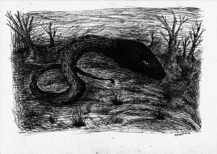 A La Nuit Velue - Drawing,  8.3x11.4 in, ©2014 by Patrick Jannin -                                                              Black and White
