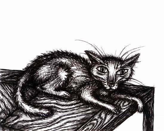 Ratty Cat Chillin on a Table - Drawing,  20x16 in ©2005 by Punit Vaidya -                            Black and White, pen, ink, cat, ratty, cute, whimsical, animals, pets, kitten, chilling