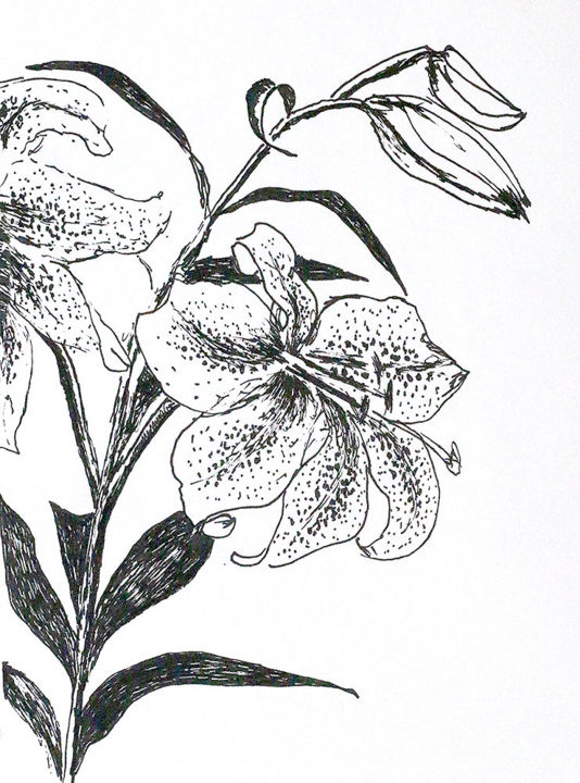 Lili Flower Art Drawings Lilies Flowers Drawing Drawing By Raphael Perez Artmajeur
