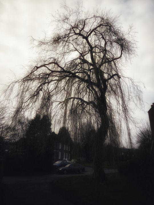 Weeping willow - Photography, ©2019 by Ravid Wolff -