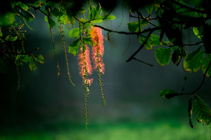 """Photography titled """"Hanging Flower"""" by Robbie Ross, Original Art,"""